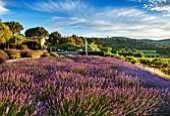 LA JEG, PROVENCE, FRANCE: DESIGNER ANTHONY PAUL - ROWS OF PURPLE LAVENDER - LAVENDULA GROSSO -  SWIMMING POOL BEYOND. SKY, JUNE, SUMMER, PURPLE