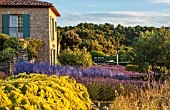 LA JEG, PROVENCE, FRANCE: DESIGNER ANTHONY PAUL - BLUE AND YELLOW PLANTING OF LAVENDER - LAVENDULA GROSSO, PEROVSKIA BLUE SPIRE AND SANTOLINA, HOUSE, SUMMER, JUNE