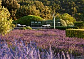 LA JEG, PROVENCE, FRANCE: DESIGNER ANTHONY PAUL - ROWS OF PURPLE LAVENDER - LAVENDULA GROSSO - WITH SWIMMING POOL BEYOND. JUNE. SUMMER, PURPLE