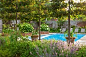 THE COACH HOUSE, SURREY: WALLED SWIMMING POOL AREA WITH ESPALIERED MALUS RUDOLPH & NEPETA SIX HILLS GIANT. HYDRANGEA ARBORESCENS ANNABELLE IN RAISED BRICK BEDS & SUN LOUNGERS
