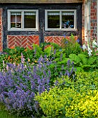 THE COACH HOUSE,SURREY:SUMMER BORDER WITH NEPETA RACEMOSA WALKERS LOW,ALCHEMILLA MOLLIS,RODGERSIA AESCULIFOLIA,DIGITALIS,DRYOPTERIS FELIX-MAS,GEUMS & IRIS SIBIRICA PERRYS BLUE