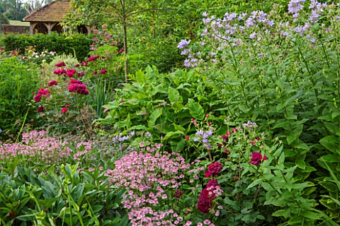 THE_COACH_HOUSE_SURREY_SUMMER_BORDER_WITH_ASTRANTIA_ROMAROSA_DARCEY_BUSSELLCAMPANULA_LACTIFLORA_PRIT
