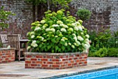 THE COACH HOUSE, SURREY:RAISED BRICK BED BESIDE SWIMMING POOL WITH HYDRANGEA ARBORESCENS ANNABELLE. WHITE, FLOWER, PLANT, SUMMER.