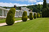 CHATSWORTH HOUSE, DERBYSHIRE:THE CONSERVATIVE WALL,BUILT 1848 BY PAXTON. CONSERVATORY TERRACE,SUMMER-BUILDING, ARCHITECTURE, HERITAGE, FORMAL, CLIPPED, TOPIARY, TAXUS BACCATA AUREA