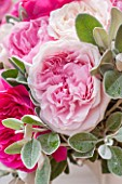THE REAL FLOWER COMPANY:CLOSE UP OF BLUSH PINK ROSE AND SENECCIO IN FLORAL ARRANGEMENT. PRETTY, PLANT PORTRAIT