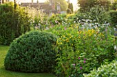 GREYHOUNDS,BURFORD,OXFORDSHIRE: THE EAST BORDER TO THE HOUSE BEYOND. WITH SELINUM WALLACHIANUM,BUPTHALUM SALICIFOLIUM AND BOX DOME. COTTAGE STYLE PLANTING, INFORMAL GARDEN, SUMMER.
