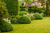 GREYHOUNDS, BURFORD, OXFORDSHIRE: LAWN IN CLASSIC COUNTRY GARDEN WITH BOX DOMES AND BORDERS FILLED WITH COTTAGE GARDEN PLANTS. WHITE WOODEN BENCH, SUMMER.