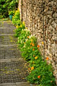 ELLIS REES, BURFORD, OXFORDSHIRE: ORANGE WELSH POPPIES UNDER VINE IN METAL TUNNEL WITH STABLE PAVERS. PATH, GARDEN