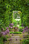 OXLEAZE FARM, OXFORDSHIRE: THE APPLE ARCH WITH TRAINED APPLE TREES & ALLIUM CHRISTOPHII. VIEW, VISTA, WINDOW, HEDGE, SUMMER, GARDEN. FOCAL POINT.