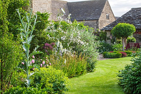 OXLEAZE_FARMOXFORDSHIRESUMMER_BORDER_WITH_ONOPORDUM_ACANTHIUM_PINK_PEONIES_WHITE_FOXGLOVES_PHILADELP