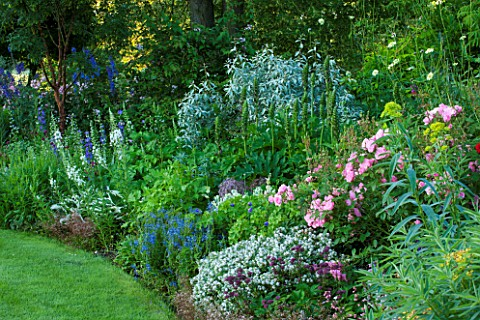 OXLEAZE_FARM_OXFORDSHIRE_MIXED_PERENNIAL_BORDER_WITH_ROSA_BONICAHEBE_PAGEIIASTRANTIA_MAJOR_CLARETVER