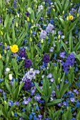 KEUKENHOF GARDENS, NETHERLANDS: HYACINTH BLUE EYES, HYACINTH BLUE JACKET, HYACINTH AIDA, ANEMONE BLANDA BLUE SHADES, MUSCARI BLUE MAGIC, TULIPA JAN VAN NES, TULIPA WHITE DREAM