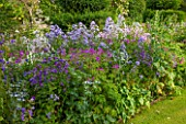 GREYHOUNDS, BURFORD, OXFORDSHIRE: COTTAGE BORDER WITH VALERIANA OFFICINALIS, CAMPANULA VARS & ERYNGIUM BOURGATII. SUMMER, LILAC,PURPLE. MIXED BORDER, PERENNIALS