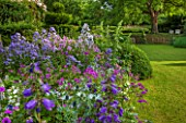 GREYHOUNDS, BURFORD, OXFORDSHIRE:COUNTRY GARDEN & COTTAGE BORDER WITH VALERIANA OFFICINALIS, CAMPANULA VARS & ERYNGIUM BOURGATII. WITH BOX DOMES & HOLLYHOCKS. SUMMER, LILAC,PURPLE