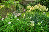 GREYHOUNDS, BURFORD, OXFORDSHIRE: BORDER UNDER THE WALNUT TREE WITH ACHILLEA GRANDIFLORA, THALICTRUM FLAVUM AND ACONITES. WITH METAL BENCHES. A PLACE TO SIT. GARDEN, SHADE, WHITE