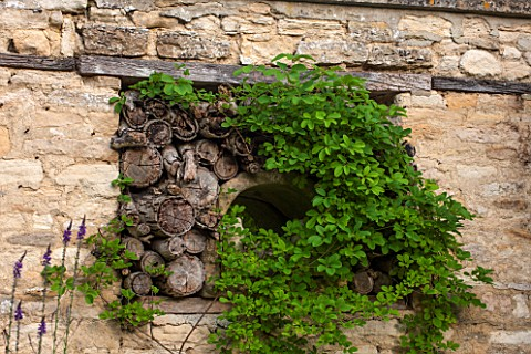 GREYHOUNDS_BURFORD_OXFORDSHIRE_OLD_LOGS_SET_INTO_STONE_WALL_WITH_UNKNOWN_CLIMBER_INSECT_HOME_FEATURE