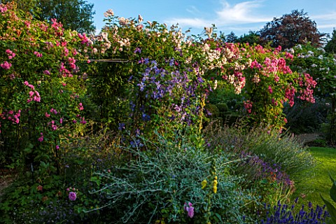 EASTLEACH_HOUSE_GLOUCESTERSHIRE_WALLED_GARDEN_PERGOLA_WITH_RAMBLING_ROSES__ROSA_PRINCESS_LOUISE_ROSA