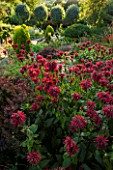 EASTLEACH HOUSE, GLOUCESTERSHIRE: RED BORDER - BERBERIS ATROPURPUREA NANA, MONARDA SQUAW. ERYNGIUM MISS WILMOTS GHOST. FLOWERS, FLOWERING, HOT, SUMMER