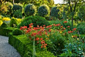 EASTLEACH HOUSE, GLOUCESTERSHIRE: RED BORDER - BOX EDGED BED WITH ALSTROEMERIA, VERBASCUM AND SORBUS ARIA LUTESCENS. FLOWERS, FLOWERING, SUMMER, ENGLISH, GARDEN