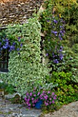 EASTLEACH HOUSE, GLOUCESTERSHIRE: WALLED GARDEN - SUMMERHOUSE, EUONYMUS SILVER QUEEN, CLEMATIS WISLEY, BLUE CONTAINER OF PETUNIAS
