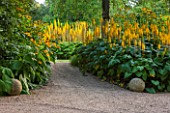 BELMONT HOUSE, SUSSEX - DESIGN ANTHONY PAULGRAVEL PATH, YELLOW, ORANGE FLOWERS OF LIGULARIA ZEPTER, AGM, SUMMER, PERENNIALS