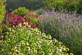 THE REAL FLOWER COMPANY: THE ROSE PADDOCK - ROWS OF WHITE ECHINACEA MAGICAL MILKSHAKE AND ECHINACEA DOUBLE DECKER, VERBENA BONARIENSIS