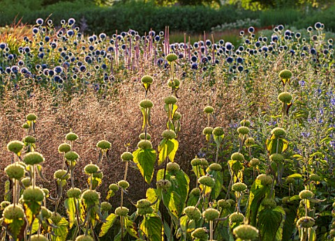 HAUSER__WIRTH_SOMERSET_THE_OUDOLF_FIELD_DURSLADE_FARM__NEW_PERENNIAL_BORDER_PLANTED_BY_PIET_OUDOLF__