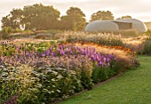 HAUSER & WIRTH, SOMERSET: THE OUDOLF FIELD, DURSLADE FARM - NEW PERENNIAL BORDER AT SUNRISE BY PIET OUDOLF - PATH BY BORDER AT SUNRISE - LIATRIS SPICATA, RADIC PAVILION