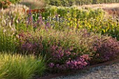 HAUSER & WIRTH, SOMERSET: THE OUDOLF FIELD, DURSLADE FARM - NEW PERENNIAL BORDER BY PIET OUDOLF - SESLERIA AUTUMNALIS, KNAUTIA MACEDONICA, ORIGANUM HOPLEYS, PHLOMIS RUSSELIANA