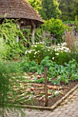 RHS GARDEN ROSEMOOR, DEVON: THE VEGETABLE GARDEN IN SUMMER. JULY, POTAGER, VEGETABLES, ONIONS LEFT OUT TO DRY, THATCH, THATCHED, SUMMERHOUSE
