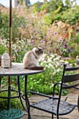 ANNE GODFREYS PRIVATE GARDEN, HERTFORDSHIRE. OWNER OF DAISY ROOTS NURSERY. TABLE AND CHAIRS ON PATIO WITH PET CAT BANJO - PET, ANIMAL