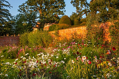 KELMARSH_HALL_NORTHAMPTONSHIRETHE_WALLED_GARDEN_WITH_LATE_SUMMER_DISPLAY_OF_DAHLIAS_INCL_BISHOP_OF_A