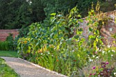 KELMARSH HALL, NORTHAMPTONSHIRE: LATE SUMMER BORDER IN WALLED GARDEN WITH SUNFLOWERS, ECHINACEA, WHITE COSMOS, AMARANTHUS MEKONG RED, ZINNIAS & NEPETA. PATH, GARDEN,EDGING