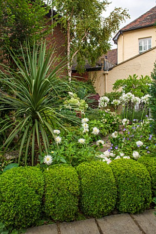 THE_OLD_BAKEHOUSE_SHERE_SURREY_SMALL_TOWN_GARDEN_PATH_BOX_BALLS_BIRD_BOX__YUCCA_AGAPANTHUS_AFRICANA_