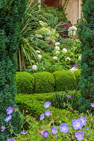 THE_OLD_BAKEHOUSE_SHERE_SURREY_SMALL_TOWN_GARDEN_PATH_BOX__BALLS_YUCCA_AGAPANTHUS_AFRICANA_ALBUS_WHI