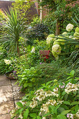 THE_OLD_BAKEHOUSE_SHERE_SURREY_SMALL_TOWN_GARDEN_GREEN_YUCCA_HYDRANGEA_ARBORESCENS_ANNABELLE_BORDER