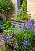 THE OLD BAKEHOUSE, SHERE, SURREY: SMALL TOWN GARDEN, WOODEN HERB CONTAINERS AGAINST WALL WITH BLUE AGAPANTHUS