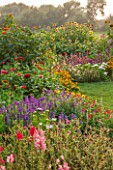 ASTON POTTERY, OXFORDSHIRE: ANNUAL BORDER - SUNFLOWERS, TITHONIA FIESTA DEL SOL, CLEOME, ZINNIA. BORDERS, LATE, SUMMER, AUTUMN, ANNUALS, LAWN