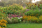ASTON POTTERY, OXFORDSHIRE: BORDER, ANNUALS, TITHONIA ROTUNDIFOLIA YELLOW TORCH , COSMOS, CLEOME MAUVE QUEEN, HELIANTHUS, SUNFLOWERS