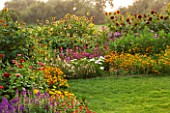 ASTON POTTERY, OXFORDSHIRE: BORDER, ANNUALS, TITHONIA FIESTA DEL SOL, COSMOS, CALENDULA, CLEOME MAUVE QUEEN, HELIANTHUS, SUNFLOWERS, ZINNIA, LATE, SUMMER, LAWN, GRASS