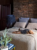 ABIGAIL AHERN HOUSE, LONDON: BEDROOM PAINTED IN CROSBY - MAUD THE DOG ON BED, PILLOWS, DARK, ROOM, INTERIOR, THROW, FAUX STAGHORN PLANT, SHAGGY PALM LAMP DARK