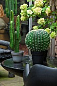 ABIGAIL AHERN HOUSE, LONDON: TOWN GARDEN - OUTDOOR PATIO AREA - BLACK BENCH, BLACK CHAIR, BLACK TABLE, FAUX CACTUS IN BLACK CONTAINER, HYDRANGEA, PATIO, PATH, PAVING