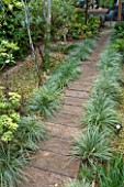 ABIGAIL AHERN HOUSE, LONDON: WOODLAND TOWN GARDEN. FAUX WOODEN SLEEPER PATH, GRAVEL, CABIN TYPE SHED, GRAVEL, EUCALYPTUS