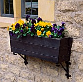 WINTER FLOWERING PANSIES IN A WOODEN WINDOW BOX ON THE WALL OF THE LYGON ARMS  GLOUCESTERSHIRE.