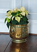 BURTON AGNES HALL, EAST YORKSHIRE: CHRISTMAS - THE WHITE DRAWING ROOM - GREEN POINSETTIA IN METAL CONTAINER. HOUSEPLANT, HOUSE PLANT
