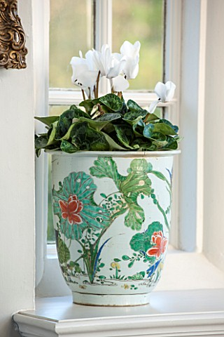 BURTON_AGNES_HALL_EAST_YORKSHIRE_CHRISTMAS__WHITE_CYCLAMEN_IN_DECORATIVE_CONTAINER_HOUSEPLANT_HOUSE_