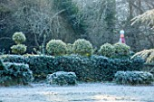HIGHFIELD HOLLIES, HAMPSHIRE: ILEX CRENATA HOLLY HEDGE WITH CLIPPED TOPIARY SHAPES ON TOP IN FROST. EVERGREEN, ILEX, WINTER, DECEMBER, HEDGING, HEDGES