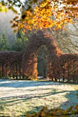 HIGHFIELD HOLLIES, HAMPSHIRE: WINTER - CHRISTMAS - CLIPPED COPPER BEECH HEDGE IN FROST. WINTER, DECEMBER, HEDGING, HEDGES, ARCH