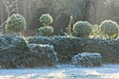 HIGHFIELD HOLLIES, HAMPSHIRE: WINTER - CHRISTMAS - ILEX CRENATA HOLLY HEDGE WITH CLIPPED TOPIARY SHAPES ON TOP IN FROST. EVERGREEN, ILEX, WINTER, DECEMBER, HEDGING, HEDGES