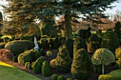 BRODSWORTH HALL, YORKSHIRE: STATUE, DAWN. WINTER, JANUARY, TOPIARY EVERGREEN, BORDER, FORMAL, GARDEN, COUNTRY, CLIPPED, HOLLY, CEDAR OF LEBANON